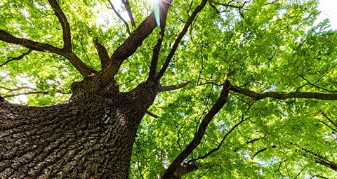 Nutzen Sie Bioerdgas anteilig in EWE Erdgas busines
